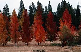 duds fall color trees garden design