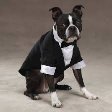 pets wedding clothes bridal shops toronto wedding evening