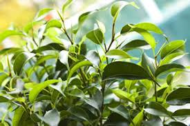 grünpflanzen im schlafzimmer zimmerpflanzen im schlafzimmer empfehlenswerte pflanzen
