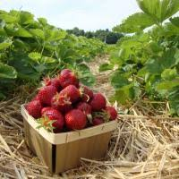 7 best nofo farms to explore long island pulse magazine
