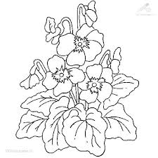 coloring pages plants www mindsandvines