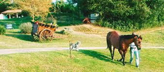chambre hote ariege willow farm gite en ariege avec piscine chambre hote ariege