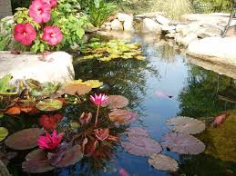 backyard pond plants backyard ponds ideas walsall home and