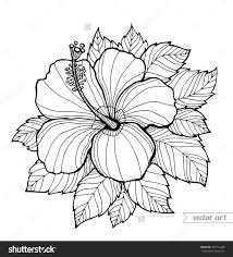 coloring pictures of hibiscus flowers stock vector hawaii hibiscus flower leaf aloha hawaii vector floral