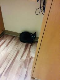 Swollen Laminate Flooring October 2016 Oh My Dog