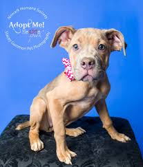 adoptable dogs at the newark humane society new jersey stacey