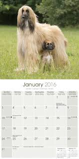 afghan hound calendar 2015 afghan 2016 wall calendar amazon co uk avonside publishing