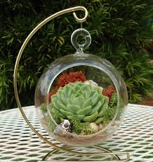 garden beautiful succulents in hanging pots decorative colorful