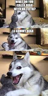 Pun Husky Meme - the best of bad pun husky