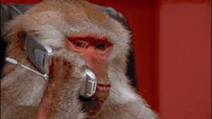Baboon Meme - phone monkey gif find share on giphy
