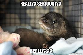 Otter Meme - really seriously really really otter make a meme