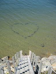 we love lieutenant island cape cod www sweetbriar realty com