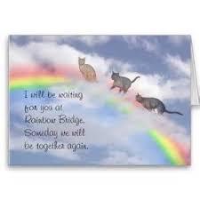 trauersprüche katze my babycat katzen katzen trauer und regenbogenbrücke