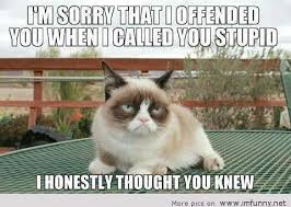Stupid Cat Meme - cat about stupid people