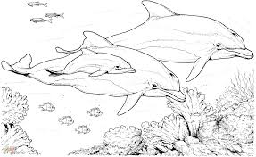 dolphins swimming in water coloring pages for kids bz9