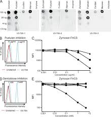 a mutated b cell chronic lymphocytic leukemia subset that