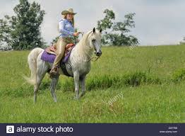 Beautiful Outdoors by Woman Horseback Riding On Beautiful White Horse Outdoors In Nature