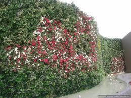 homelife 10 best plants for vertical gardens green walls indoor and outdoor vertical gardens lifewall verticle