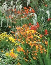 explore our gardens u0026 flowers avoca