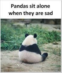 Sad Panda Meme - facebook meme of the week