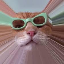 Keyboard Cat Meme - keyboard cat home facebook