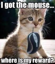 Funny Kitten Memes - image result for cute funny kitten memes kittens pinterest cat