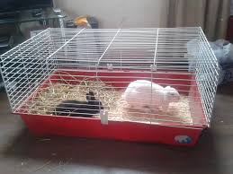 Rabbit Hutch Indoor Large 2 Baby Rabbits And Large Indoor Cage Blackpool Lancashire