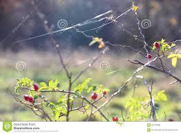 imágenes asombrosas naturaleza cosas asombrosas alrededor de nosotros en la naturaleza cadera color