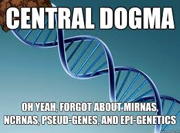 Genes And Memes - central dogma oh yeah forgot about mirnas ncrnas pseud genes