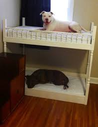 Bunk Bed For Dogs Bunk Beds Dogs And The Like Pinterest Cot Bunk Beds