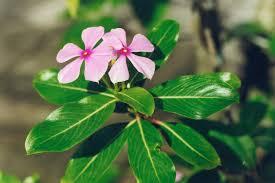 heat loving plants 10 best full sun plants heat tolerant flowers that love the sun
