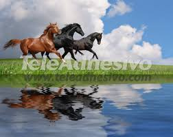 horses galloping on a lake wall murals horses and water