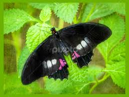 black with touch of pink other objects nature up