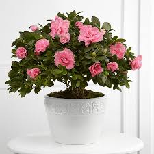 deliver flowers today same day plant delivery get plants delivered today