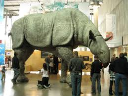 u0027s prehistoric beasts rhino family tree