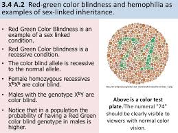 Examples Of Color Blindness Ib Biology 3 4 Inheritance