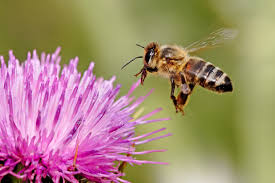 beekeeping 101 why raise honeybees the old farmer u0027s almanac