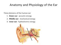 Inner Ear Anatomy And Physiology Hearing Conservation Update 14 Jan 2015 Lcdr Andrew Hayes Ppt