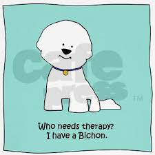 bichon frise therapy dog 101 best bichon frise images on pinterest bichons animals and