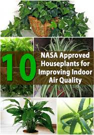 best plants for air quality top 10 nasa approved houseplants for improving indoor air quality