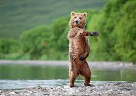 dancing bear meme guy