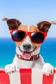 Cute Dog Products by 259 Best Dogs Eyewear Images On Pinterest Animals Puppies And