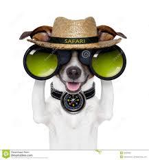 safari binoculars clipart binoculars safari compass dog watching stock photography image