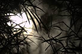 black halloween tree free images tree nature grass branch silhouette light