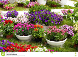 Pictures Of Garden Flowers by Garden Flowers Of Different Colors In Pots Stock Photo Image