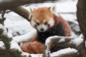 Animals In The Winter Winter Wonderland Bronx Zoo