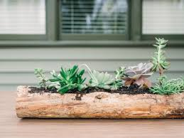 Centerpiece For Dining Table by Plant Succulents In A Log For A Fresh Fall Centerpiece Hgtv