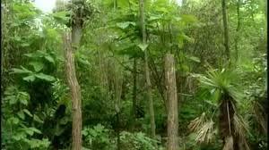 video bronx zoo congo gorilla forest exhibit martha stewart
