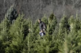 Christmas Tree Farm Va - real vs fake christmas tree facts 7 differences pros cons of