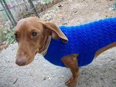 small dog sweater pdf pattern mini dachshund doxie by craftymjc